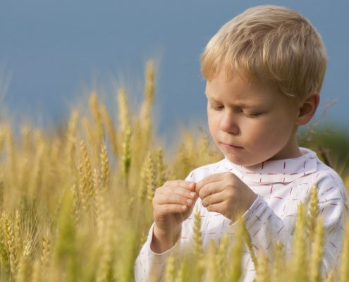 Young boy inspecting grain.